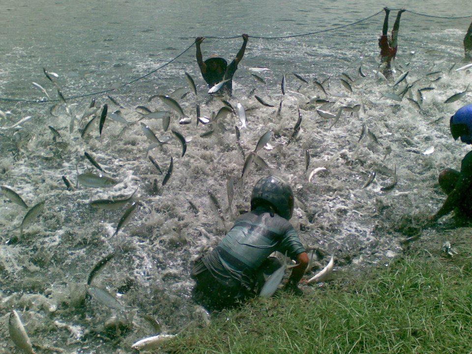 Distributor Bandeng Bekasi